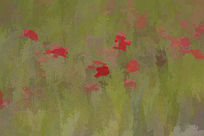 Painting - Red Poppies by David Letts