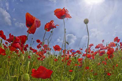 Wide Digital Art - Red Poppy And Sunrays by Melanie Viola