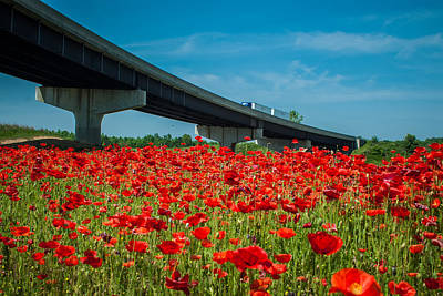 Photograph - Red Poppy Field Near Highway Road by Alex Grichenko