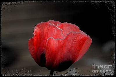 Photograph - Red Poppy Flower by Nicola Fiscarelli