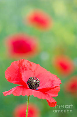 Poppy Photograph - Red Poppy by Oscar Gutierrez