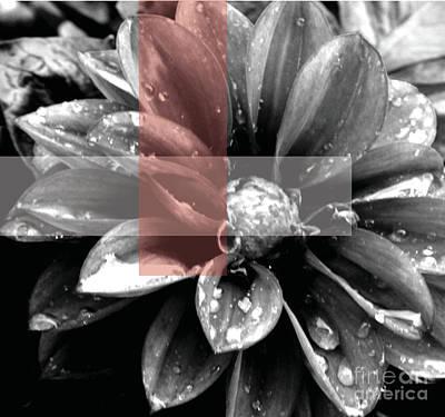 Photograph - Red Rain Blossom by Jamie Lynn