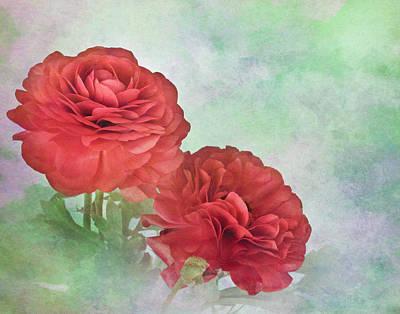 Red Ranunculus Art Print by David and Carol Kelly