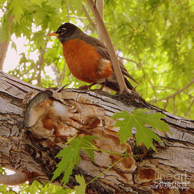 Photograph - Red Red Robin by Bobbee Rickard