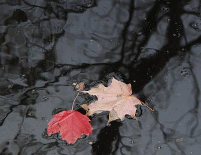 Photograph - Red Reflection 2 by Todd Sherlock