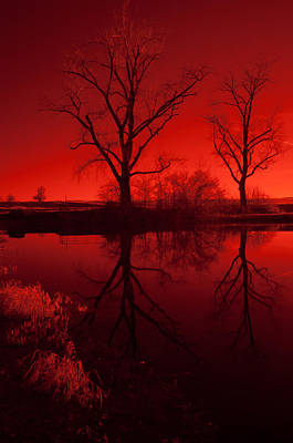 Photograph - Red Reflections by Miguel Winterpacht