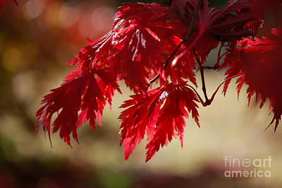 Photograph - Red Rhapsody By Jammer by First Star Art
