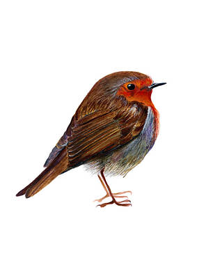 Holm Painting - Red Robin Bird by Alison Langridge