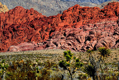 Photograph - Red Rock Canyon 7 by Diane montana Jansson