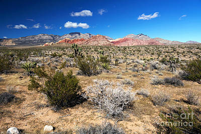 Photograph - Red Rock Canyon Landscape by John Rizzuto