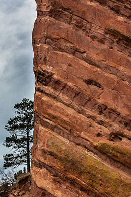 Photograph - Red Rocks And Lone Tree by Karen Saunders