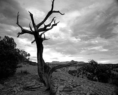 Photograph - Red Rocks Dead Tree by Tarey Potter