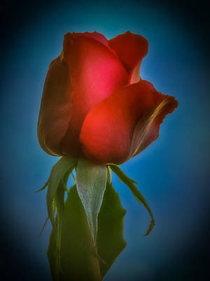 Photograph - Red Rose 2 by Ernie Echols