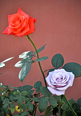 Sterling Silver Photograph - Red Rose And Sterling Silver Blue Moon Rose by Jay Milo