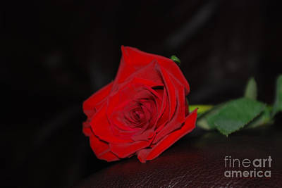 Photograph - Red Rose And Sweet Moment by Oksana Semenchenko