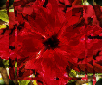 Digital Art - Red Roseabstract by D Hackett