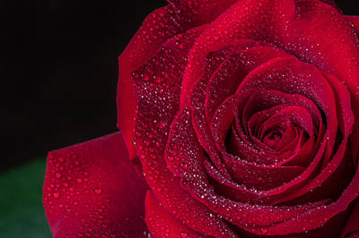 Red Rose Photograph - Red Rose  by Garvin Hunter