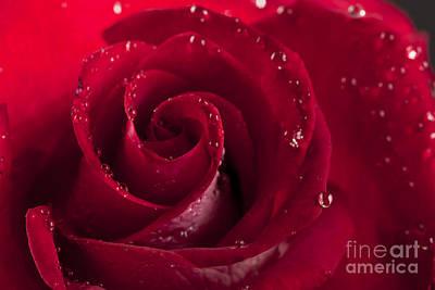 Photograph - Red Rose by Gunnar Orn Arnason