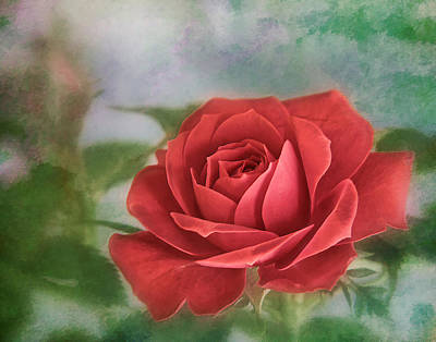 Photograph - Red Rose II by David and Carol Kelly