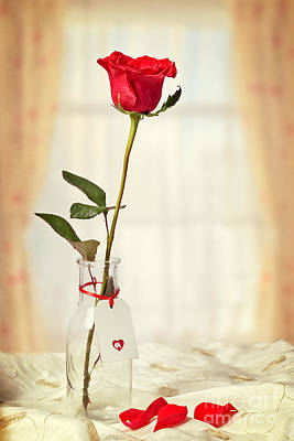Single Red Rose Photograph - Red Rose In Bottle by Amanda Elwell
