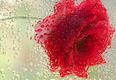 Red Rose In The Rain Art Print by Don Schwartz