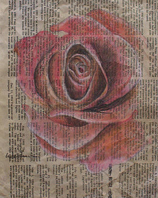 Drawing - Red Rose by Kathy Weidner