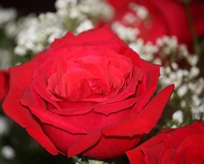 Red Rose Art Print by Kimber  Butler