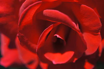 Photograph - Red Rose Layers by Laurie Perry