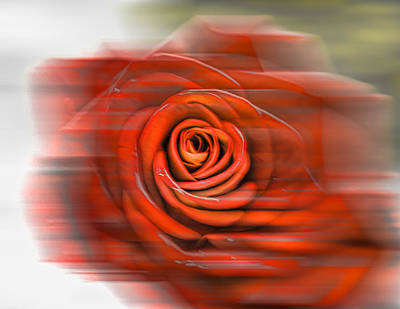 Art Print featuring the photograph Red Rose by Leif Sohlman