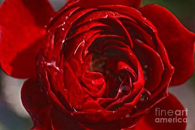 Red Rose Art Print by Nur Roy