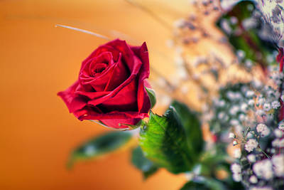 Photograph - Red Rose Of Love by EXparte SE