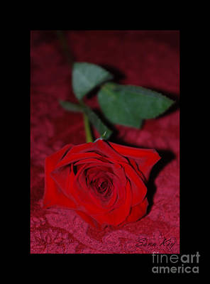 Photograph - Red Rose by Oksana Semenchenko