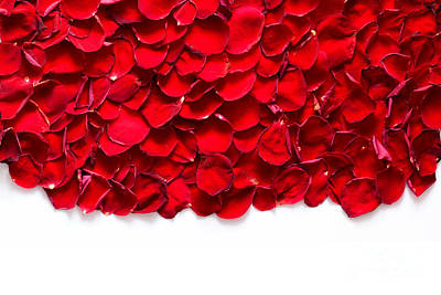 Anniversary Photograph - Red Rose Petals On White Background by Michal Bednarek