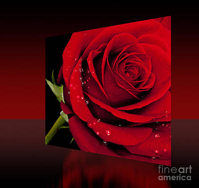 Art Print featuring the photograph Red Rose by Shirley Mangini