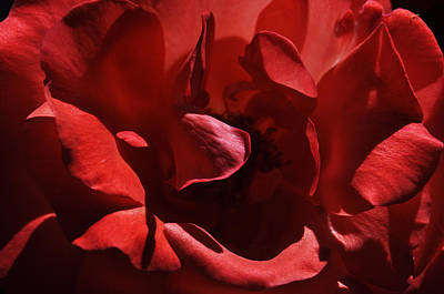 Photograph - Red Rose by Staci Bigelow