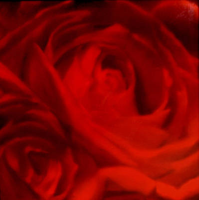 Painting - Red Rose by Thomas Darnell