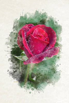 Mixed Media - Red Rose Watercolor Art by Christina Rollo