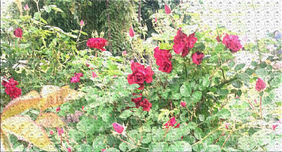 Flowers Photograph - Red Roses by Alys Caviness-Gober