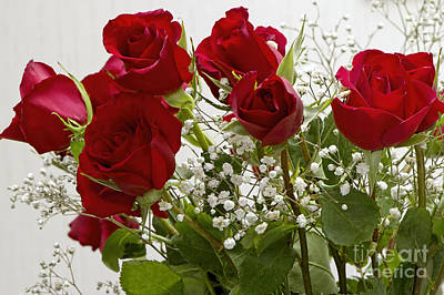 Photograph - Red Roses And White Babys Breath by Sharon Talson