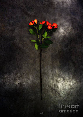 Strau Photograph - Red Roses by ARTSHOT - Photographic Art