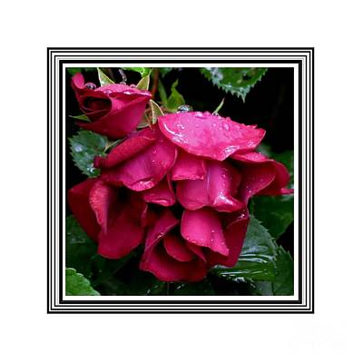 Photograph - Red Roses by Donna Cavanaugh