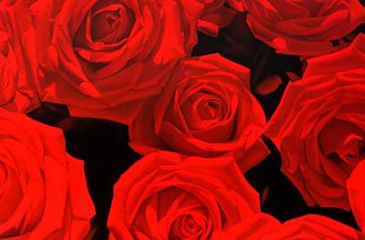 Painting - Red Roses Oil Painting by Thomas Darnell