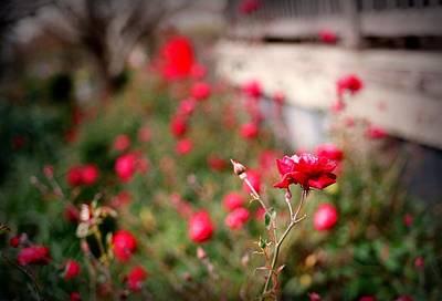 Red Roses On Film Art Print