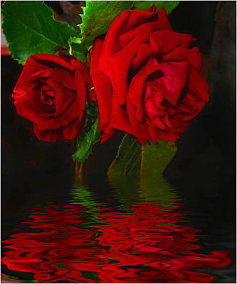 Numbers Plus Photograph - Red Roses Reflected by Joyce Dickens
