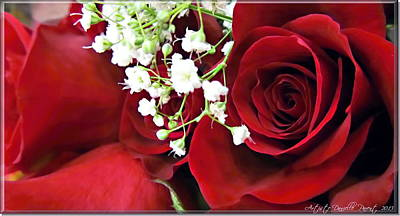 Red Roses With Baby's Breath Art Print by Danielle  Parent