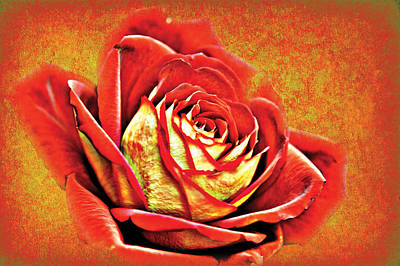 Photograph - Red Rosey by David Davies