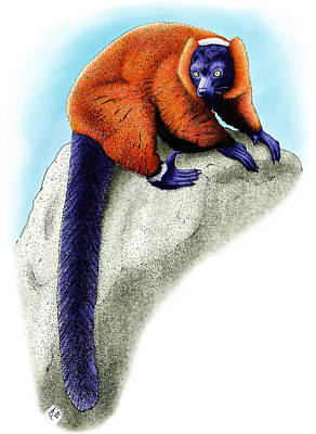 Red Ruffed Lemur Art Print by Roger Hall