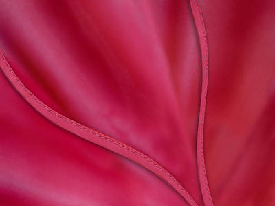 Photograph - Red Satin by Paul Wear