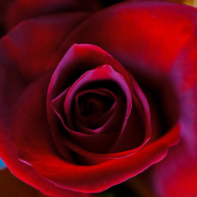 Photograph - Red Satin by Ronda Broatch