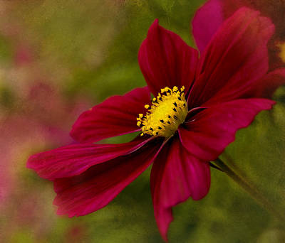 Photograph - Red Sensation by Mary Jo Allen